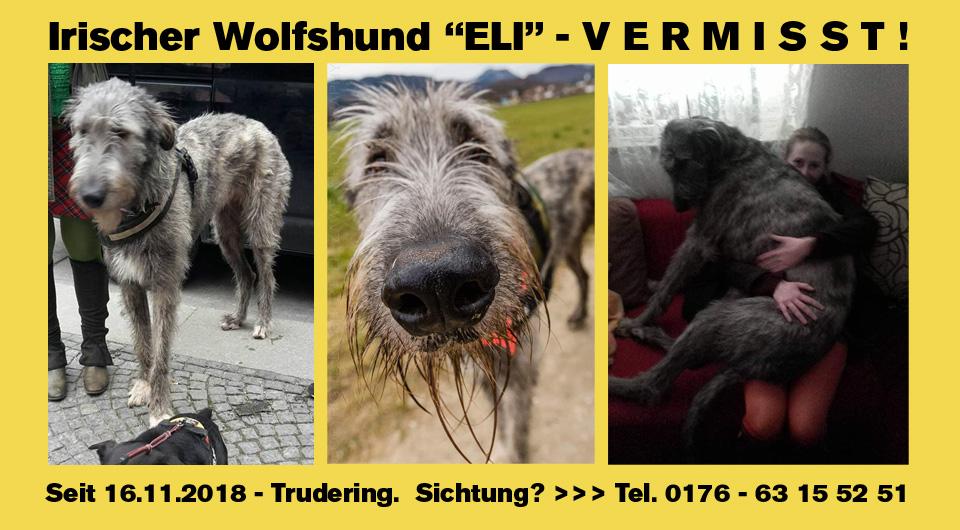 """Irischer Wolfshund """"Eli"""" aus München-Trudering seit 16.11.2018 vermisst."""