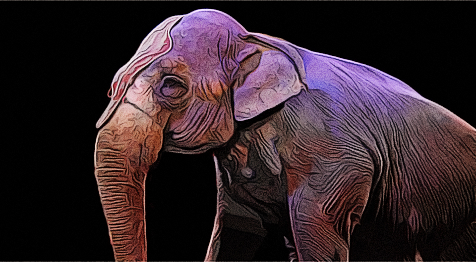 Zirkus ja, aber ohne Tiere